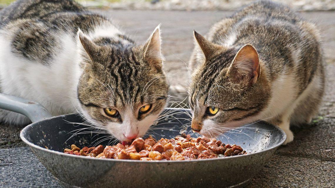 Katzenfutter bestellen